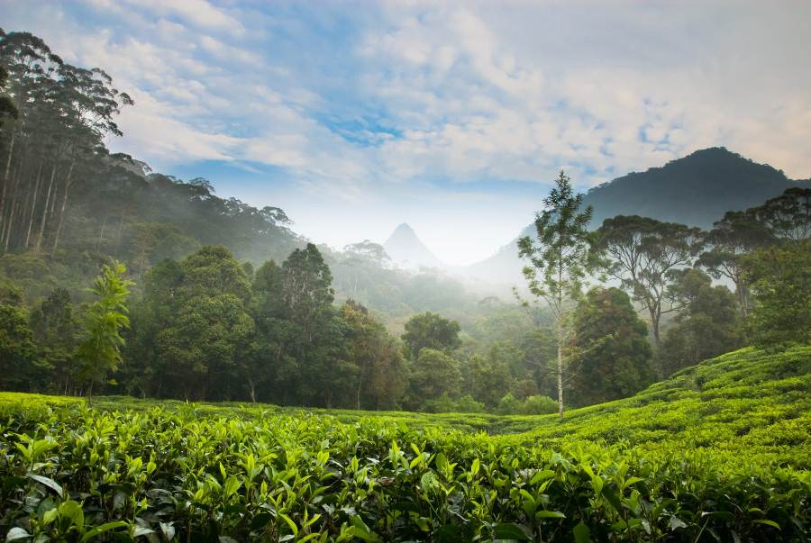 Beautiful places to visit in Sri Lanka
